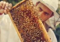 Beekeeper collecting honey selective focus on a honeycomb and be